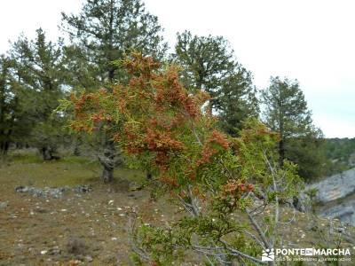 La Fuentona y el Sabinar de Calatañazor; senderismo en primavera;grupo pequeño senderismo madrid